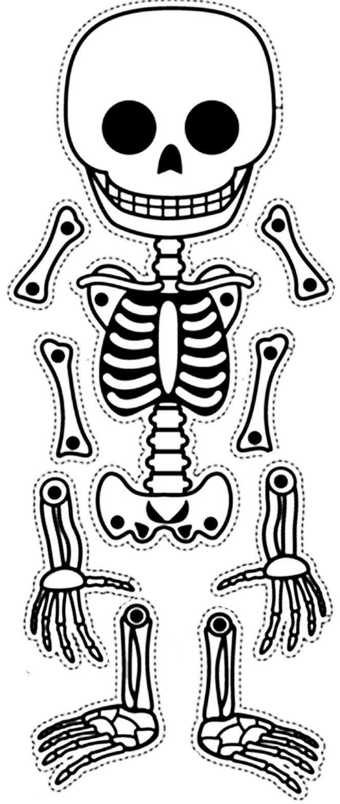 esqueleto pronto2